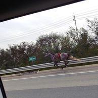 고속도로 말 등장