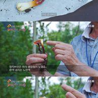 한국에서서식하는가장위험한독버섯