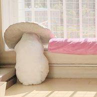 창가에 피어오른 새송이버섯(?)