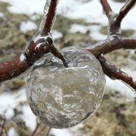 미시간에서 발견된 신기한 사과