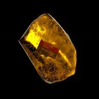 ???: 일억년 전 인간이 쓰던 저장매체입니다.