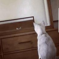 귀의 존재를 알게된 고양이.gif