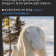 장난감에 푹 빠진 새끼 북극곰.jpg