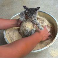 고양이 튀김