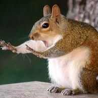 웃긴 야생동물 사진 대회 수상작