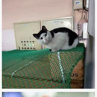길고양이 이름이 양락이인 이유 ~