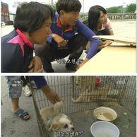 시장에서 파는 강아지를 구입한 사연