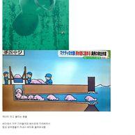 일본 배수관에 자주 출몰하는 녀석