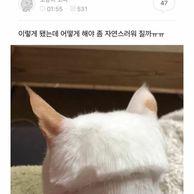 고양이 미용 대참사.jpg