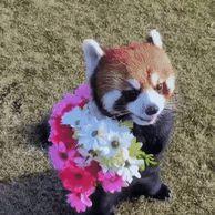 꽃을 든. GIF