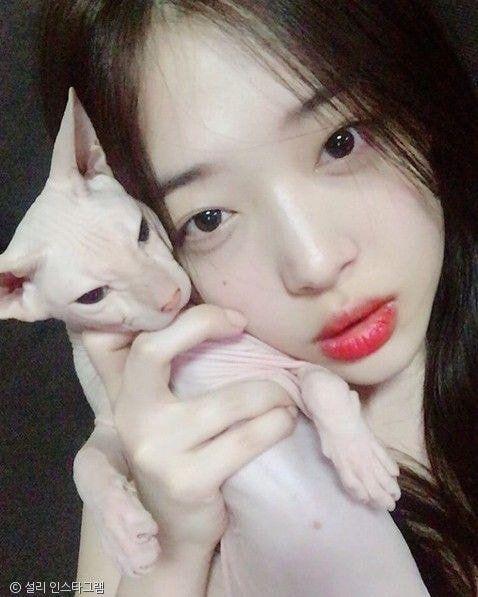[유머] 김희철 라이브 방송 중 찍힌 고양이는 -  와이드섬