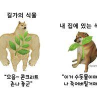 식물의 두 얼굴