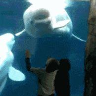 돌고래의 쇼맨십.gif
