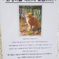 잃어버린 고양이를 찾습니다.