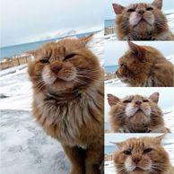 고양이가 금지된 섬, 노르웨이 령 스발바..